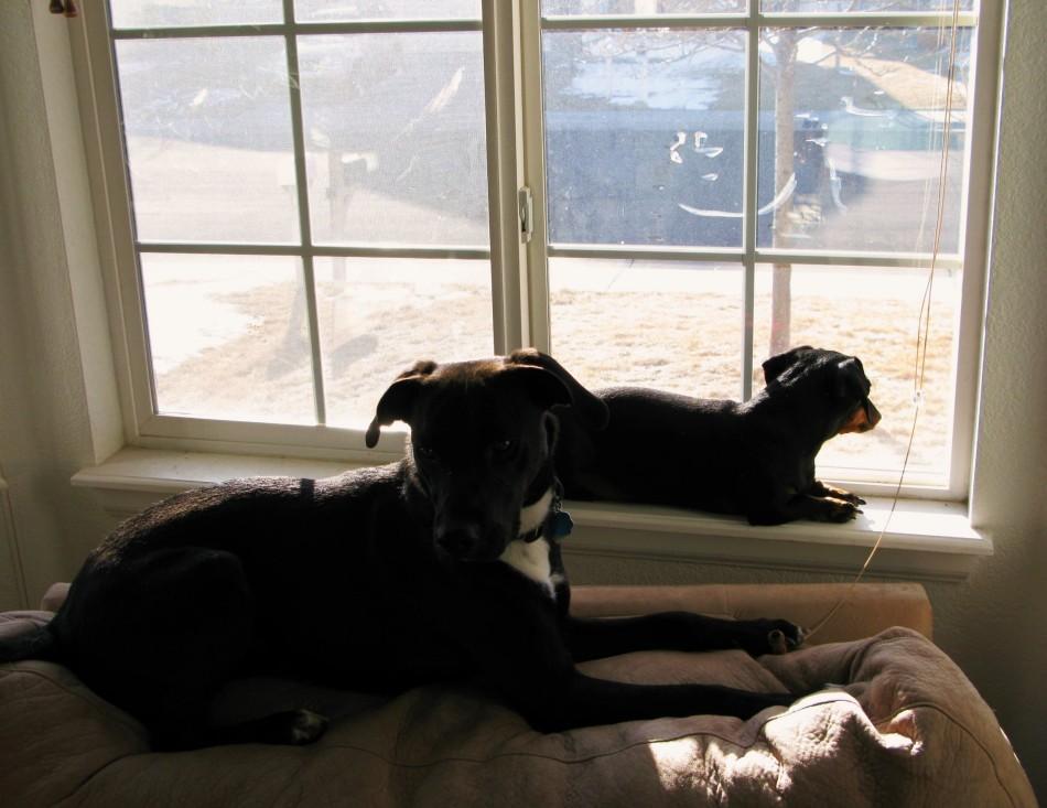 Q and Cat Dog